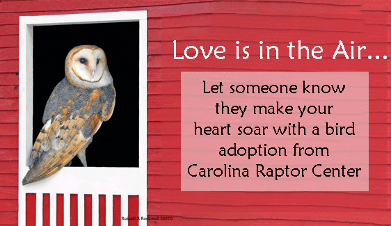 Show your Love with an Adopted Bird!