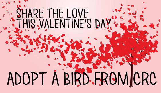 Share the love and adopt a bird for your honey!