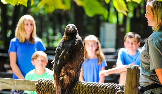 Check out new fall dates for Eagle Encounters