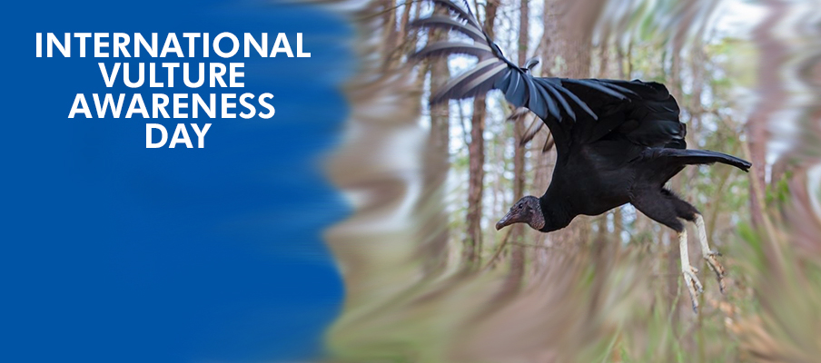 International Vulture Awareness Day Cover